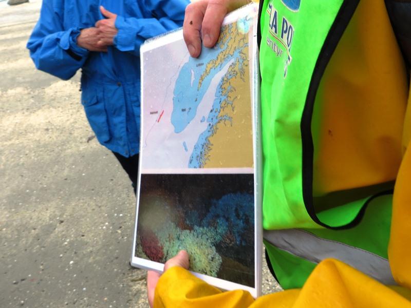 Korallenriff vor Norwegen