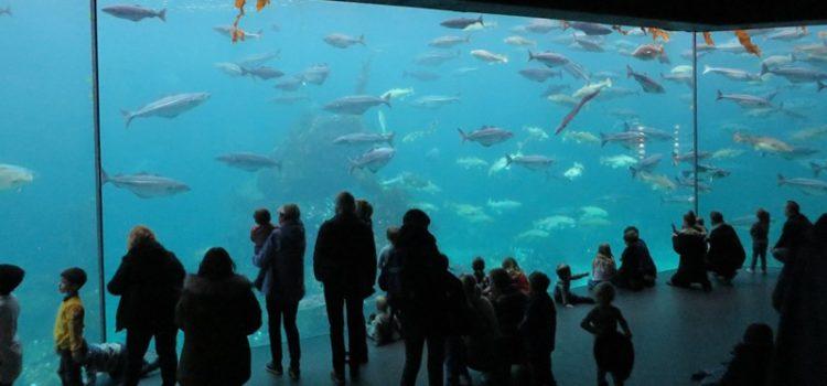 Ausflug in Alesund: Aquarium und Aksla (Nr. 2D)